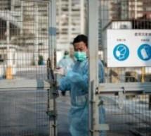 Chicken off menu as Hong Kong culls 20,000 birds in H7N9 scare