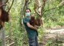 In Kalimantan, orangutans  still rare sight